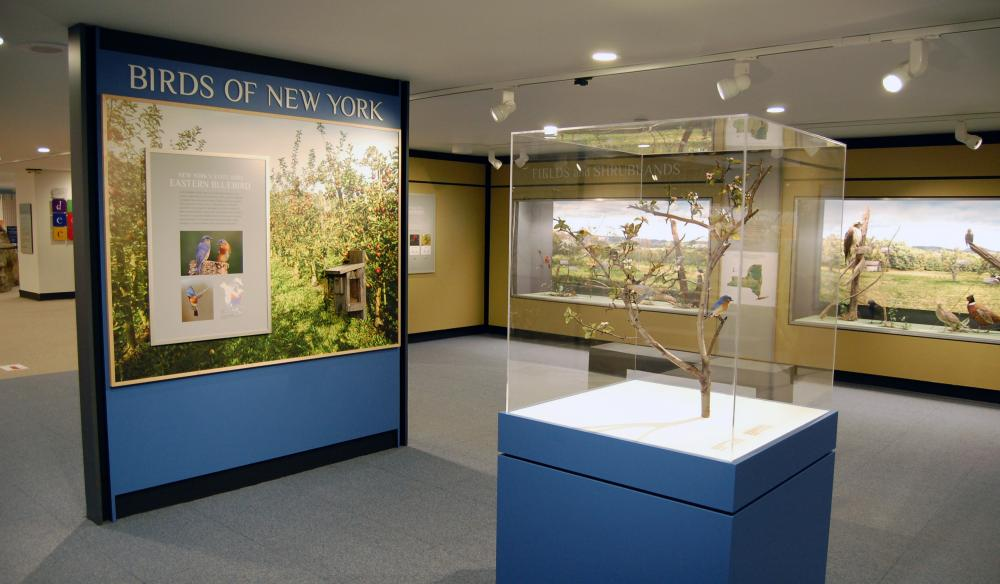 Gallery View of Birds of New York