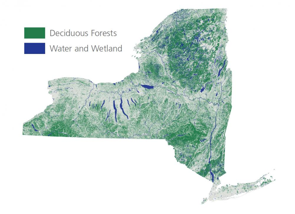 New York State Map of Deciduous Forests
