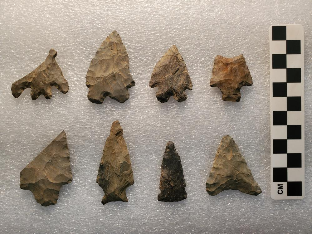 Here are some examples of Native American projectile points in the recently donated McVaugh collection.