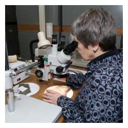 Volunteer looking through microscope