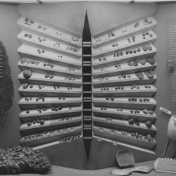 1950s Brachiopod Display in the New York State Education Building