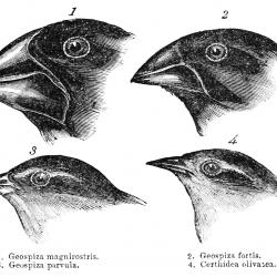 close up drawing of birds