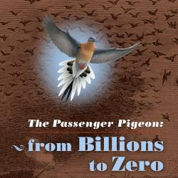 The Passenger Pigeon exhibition graphic