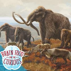 Brainfood Logo with Mammoths and Elk