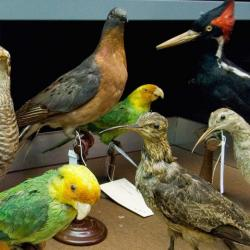 Ornithology Collection