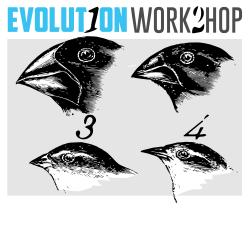 Evolution Workshop