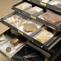 Invertebrate Paleontology Collection