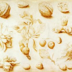 Studies of walnuts of hazelnuts by John Dunstall, painted in 1666