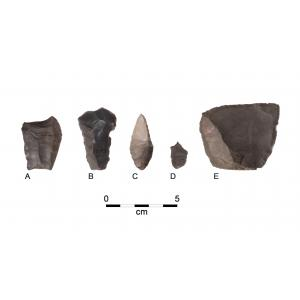Examples of Paleoindian artifacts from the OPS site. A: fluted point with impact fracture; B: Endscraper, hafted tool likely used for hide working for skin clothing manufacture; C: Hafted perforator for working bone or wood; D: Graver, delicate hand-held