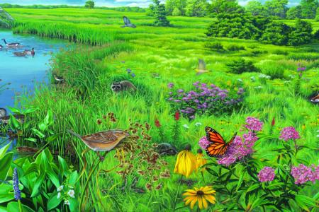 Focus on Nature - Seneca Meadows Wetland by Linda Thomas