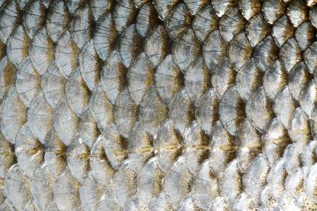 close up fish scales