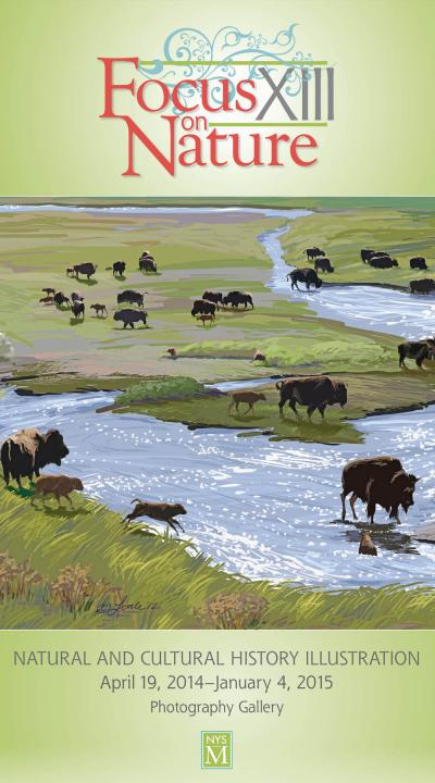 Buffalo Landscape graphic