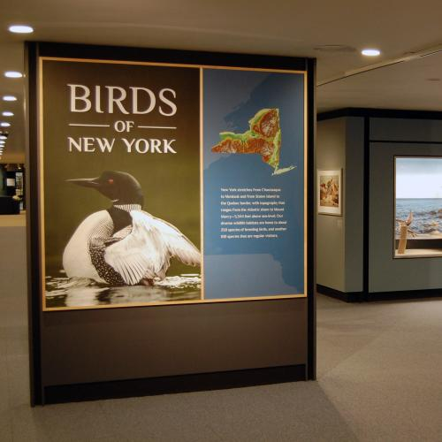 Birds of New York Gallery View