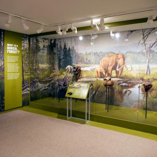 NYSM Ice Ages Boreal Forest Gallery View