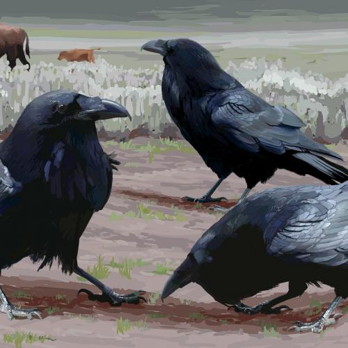 "Pam Little, ""Ravens Gathering"""