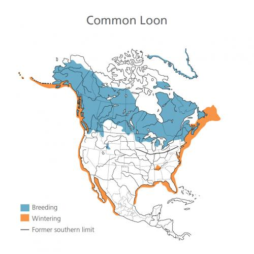 Common Loon Migration Map