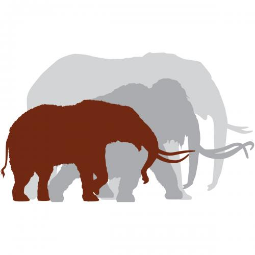 sizing chart to show difference in size of a mastodon, elephant and mammoth.