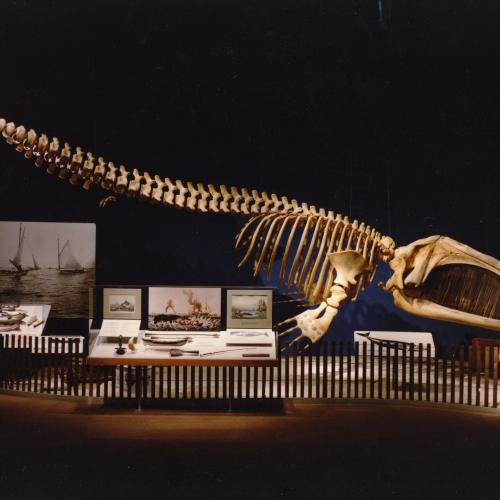 gallery view of the Port featuring a whale skeleton