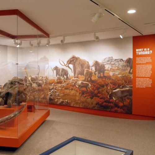 NYSM Ice Ages Tundra Gallery View