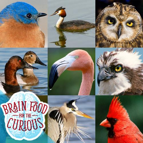 Montage of Bird Photographs