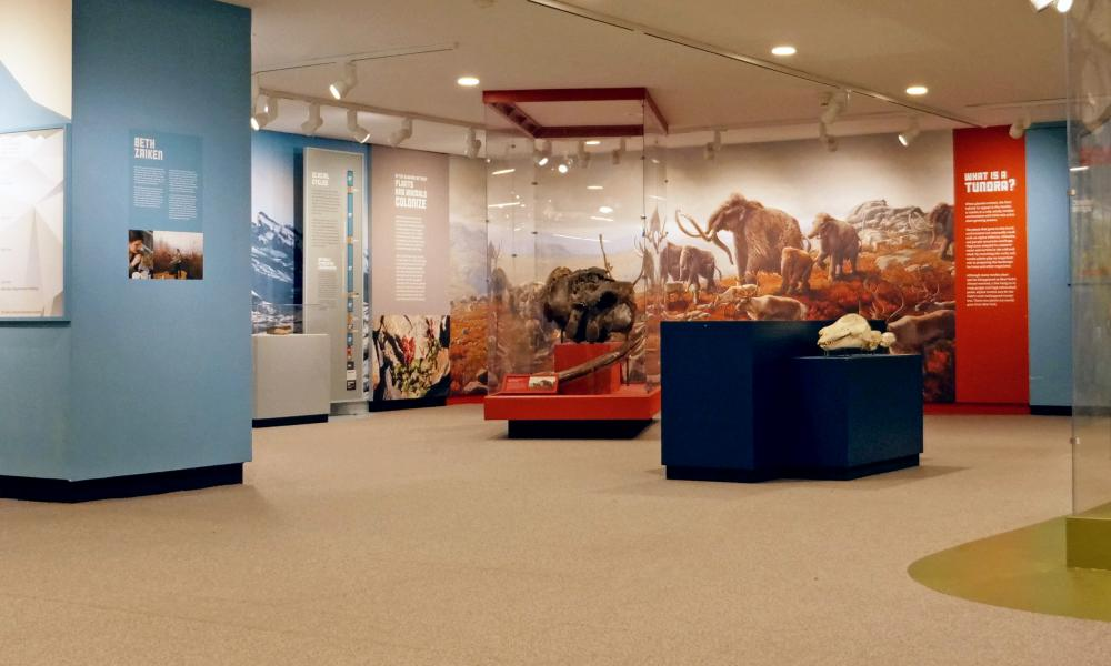 NYSM Ice Ages Gallery View
