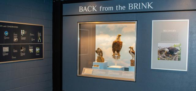 Bird Hall Extinction and Conservation Gallery