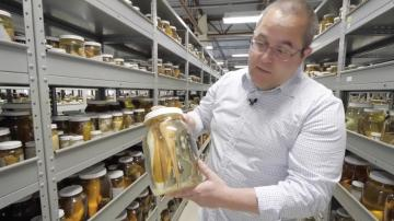 Virtual Tour of New York State Museum's Fish Lab