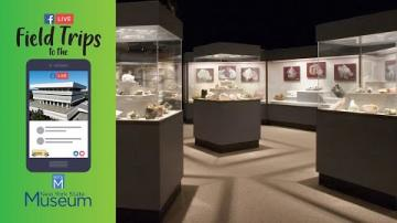 Field Trip to the NYSM: Minerals of NY Gallery Tour
