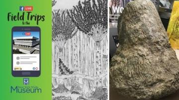 Field Trip to the NYSM: New York's Fossil Forests