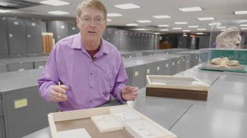 Taking Care of Home Collections: Pests and Insect Collections