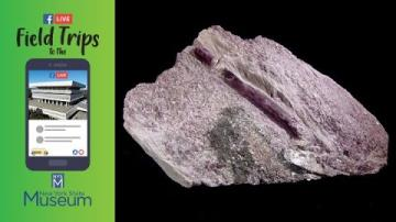 Field Trip to the NYSM: Minerals Rock! (For Kids!)