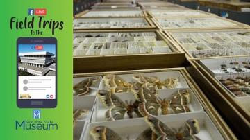 Field Trip to the NYSM: The Entomology Collection